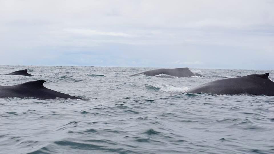 La importancia del Océano Pacífico